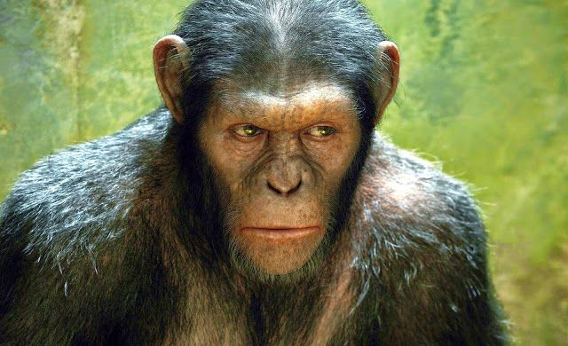 El Planeta De Los Simios Planet Of The Apes Dawn Of The Planet Excellent Movies