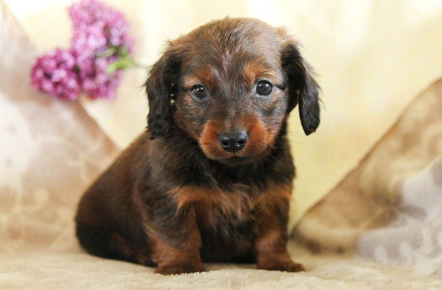 Pin By Katie Field On Outstanding Pups In 2020 With Images