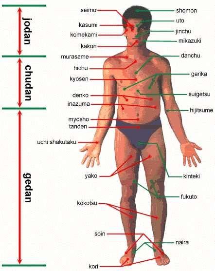 Exceptionnel Articles sur les points vitaux du corps humain.   points vitaux  TV16