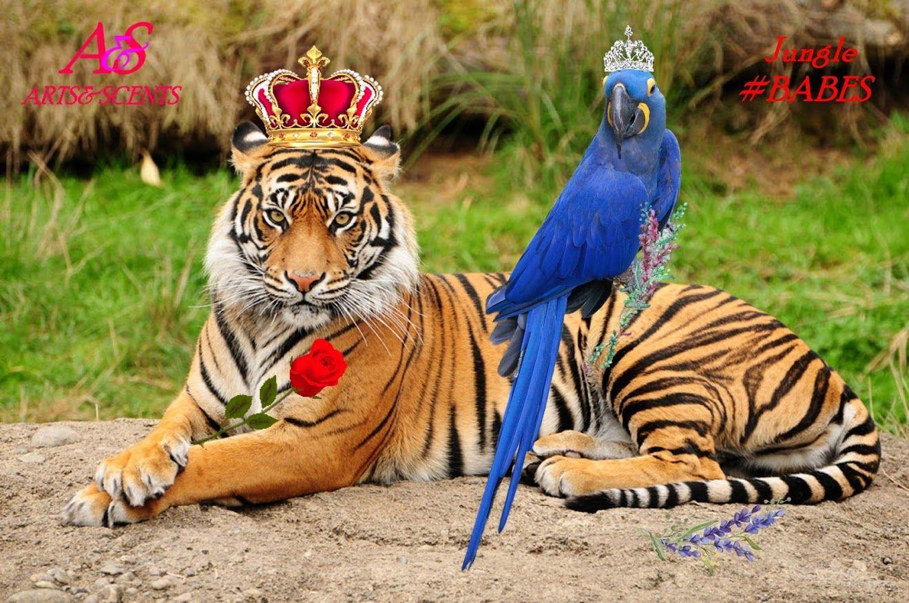 Pin auf Exotic Animals