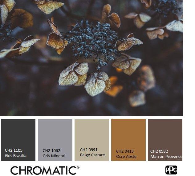 Gris profond et vieil or : parfaits pour une ambiance raffinée. #chromatic #nuancier #couleur # ...