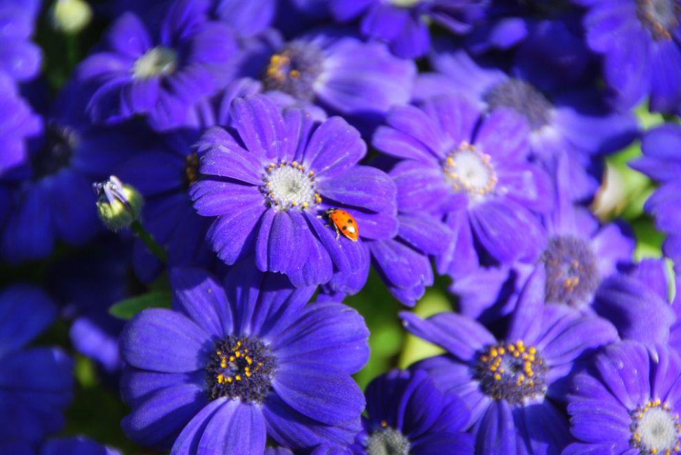 Purple - purple