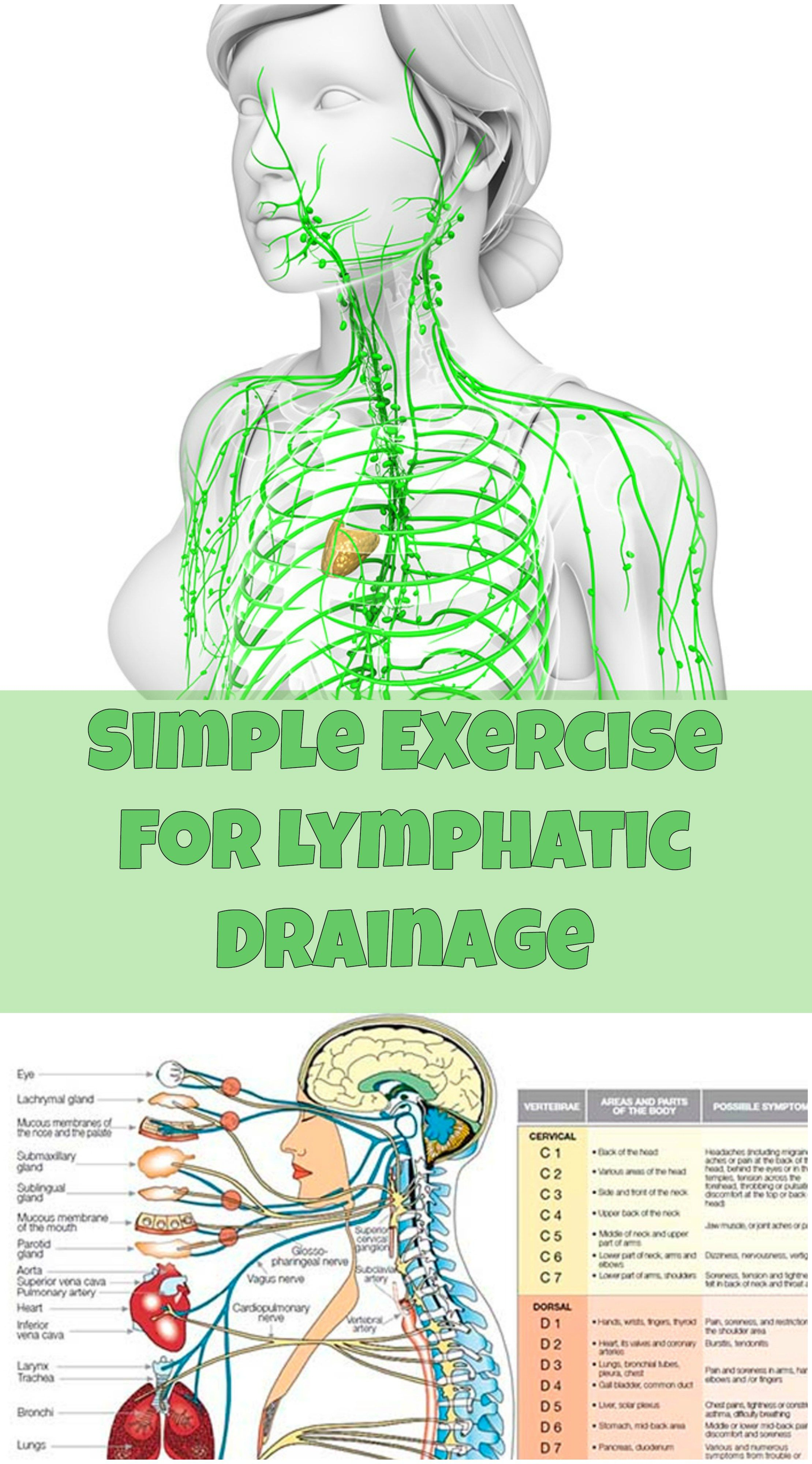 Your lymphatic system helps eliminate your body\'s waste. A healthy ...