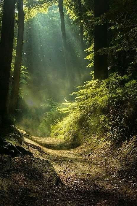 Light in the forest #Light #Forest #Darkness #Nature #Picture #Green