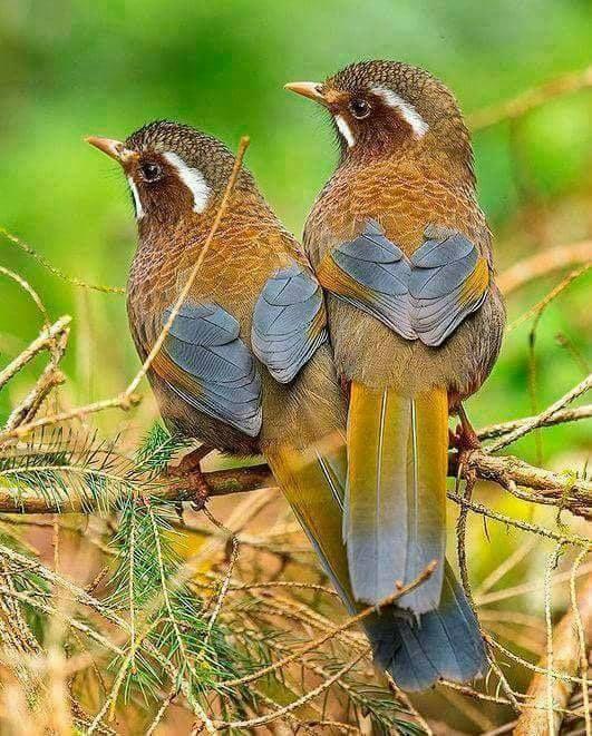 Pin Von Astrid Leu Auf Tiere Hubsche Vogel Vogel Als Haustiere