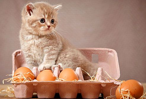 Slideshow People Foods Cats Can Eat Easter Cats Cats Dog Training Near Me