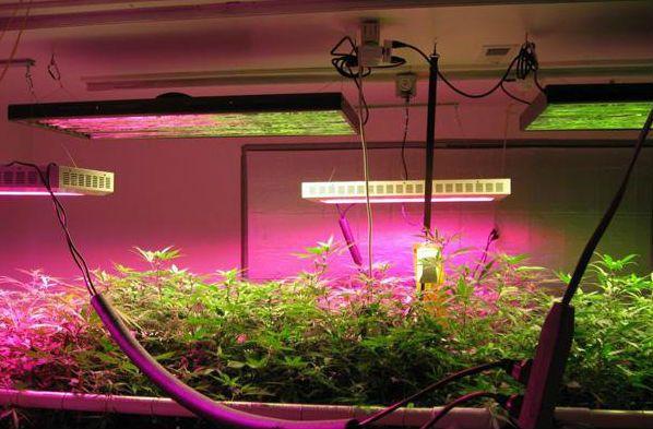 """Led Grow Lights Provide Sunlight For """"Underwater 400 x 300"""