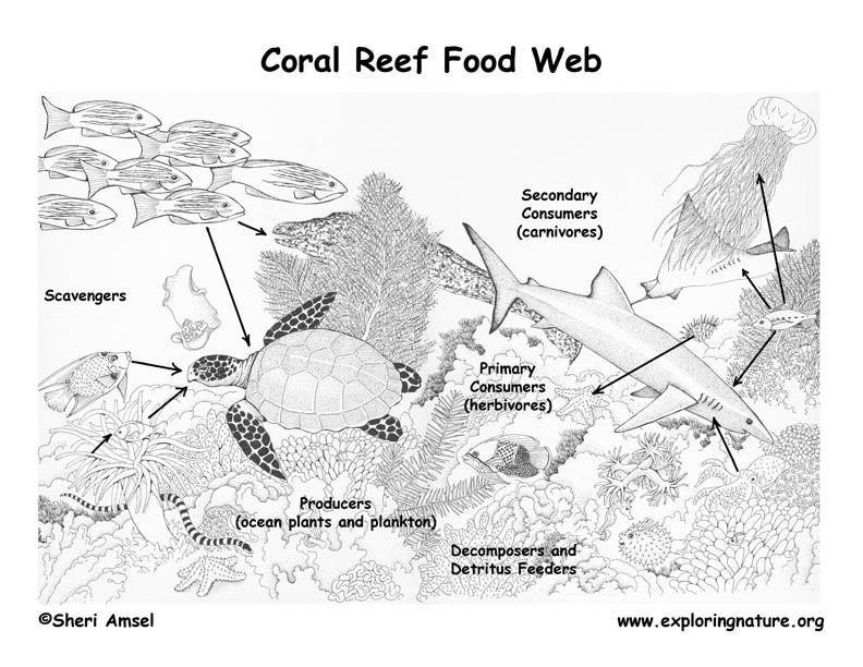 River Venture Food Web Worksheet | Food
