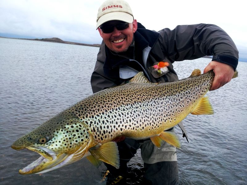 Brown trout from lake thingvellir iceland salmonids for Fishing in iceland