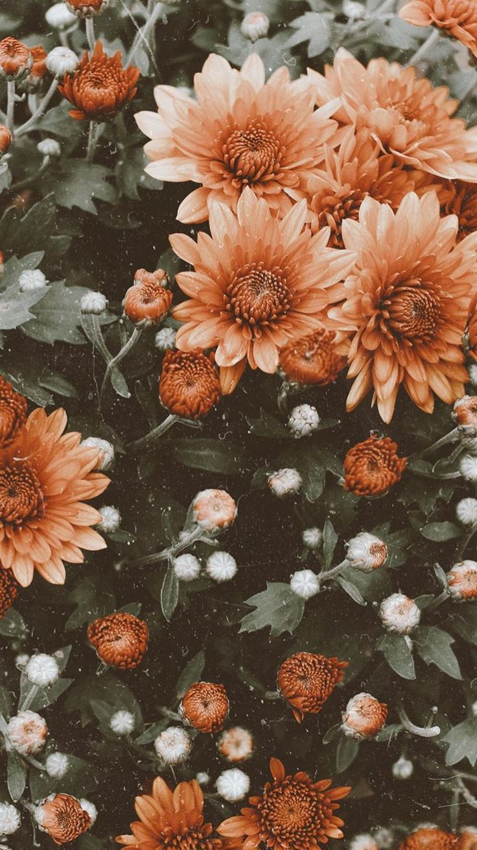 Wallpaper Blumen Jahrgang Kwiaciarnia #flowershintergrundbilder