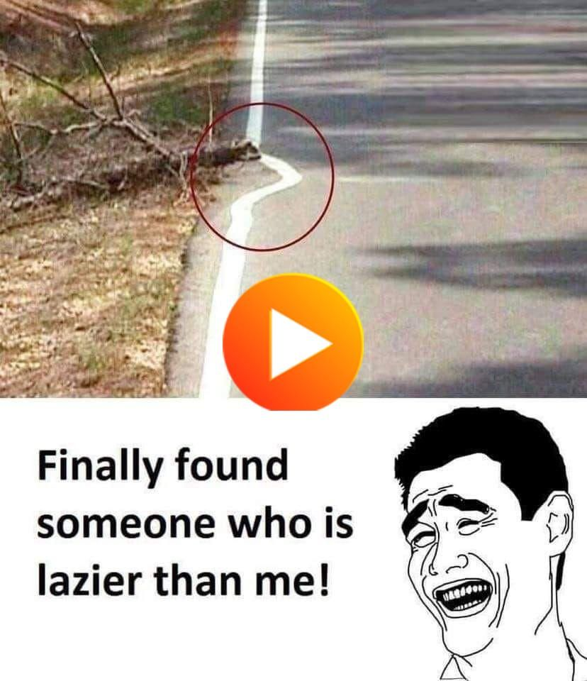 These 47 Funniest Memes Will Make You Laugh Out Loud Funny Memes Laugh Out Loud Memes