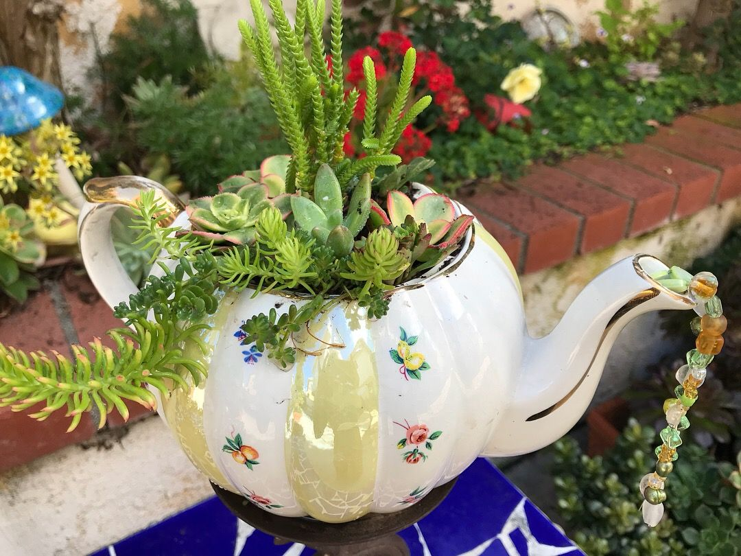 See This Is What The Giant Tea Cup Polka Dotted Planter When It Has Lovely Flowers Living Inside Teacup Flowers Tea Cup Planter Planters