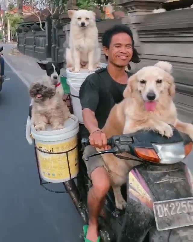 Crazy thai man carries 3 dogs on Scooter! (Must wa