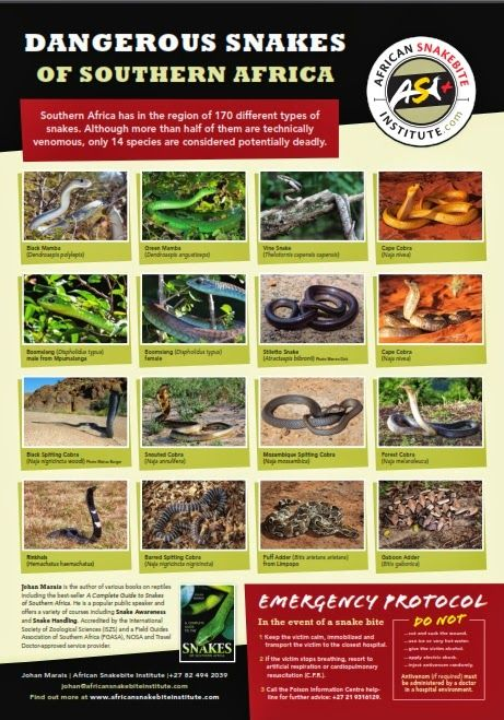 Download: Free posters of the snakes of Southern Africa  #travel #southafrica #namibia #botswana #zimbabwe #mozambique #swaziland #snakes