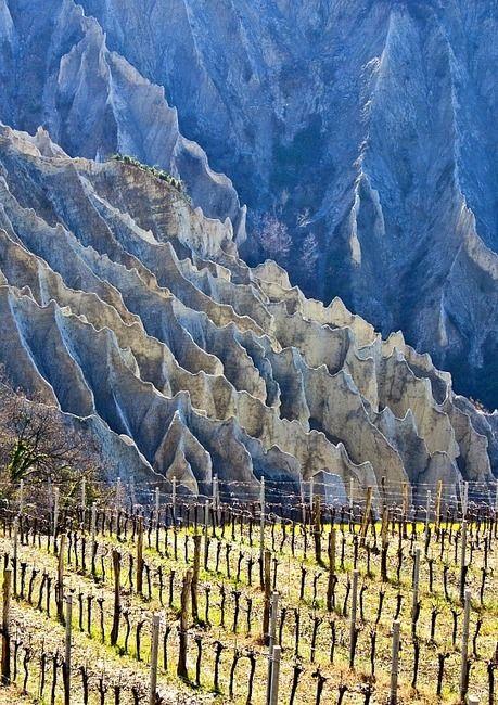 Passerina the perfumed white wine of Le Marche | Italia, Vinos, Uvas