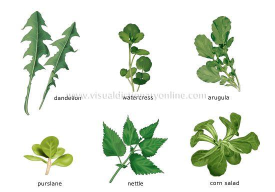 LEAF Vegetables: What have you had? Dandelion, Watercress, Arugula ...