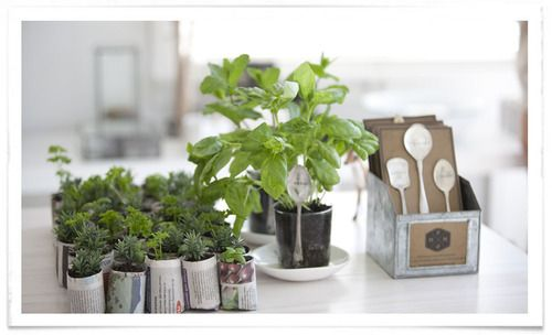 Matakana Plant Markers with cute little newspaper pots made with a paper pot press.