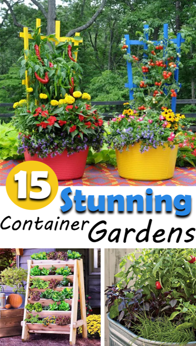 Ideas & tips for a stunning container garden.