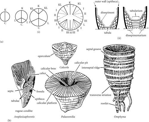 Introduction To Paleobiology And The Fossil Record Fossil Geometric Tattoo Stone