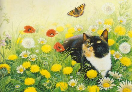 Tortoiseshell cat by lesley anne ivory