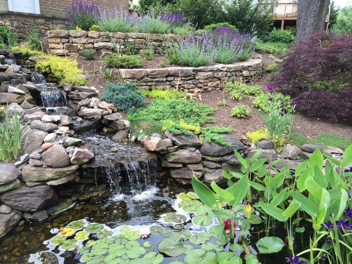 Pond In A Garden With A Slope Terraced Landscaping Hillside Landscaping Backyard Water Feature