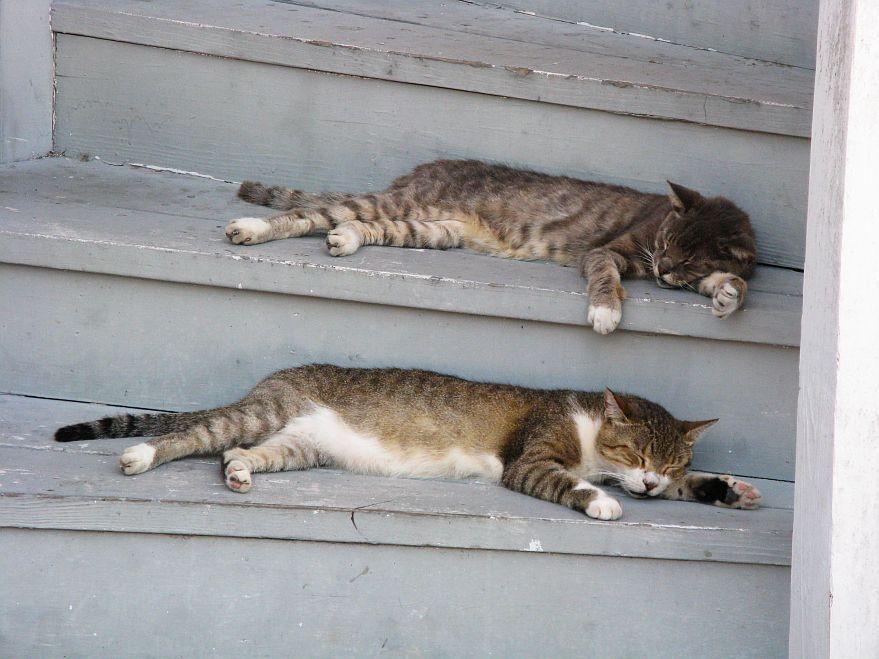 sleeping by Bianka  Beier on 500px