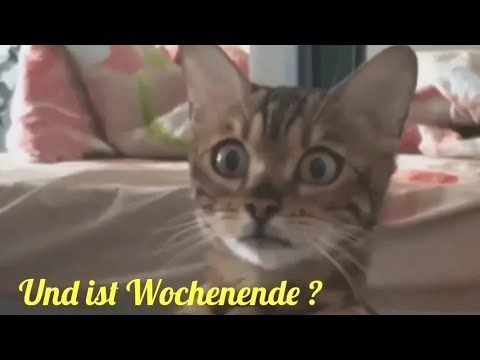 Schoneswochenende Niceweekend Katze Cat Chat Kater Kitten