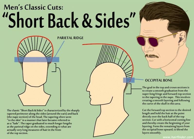 Fade Haircut Diagram Hair Cuts Pinterest Hair Cuts Hair And