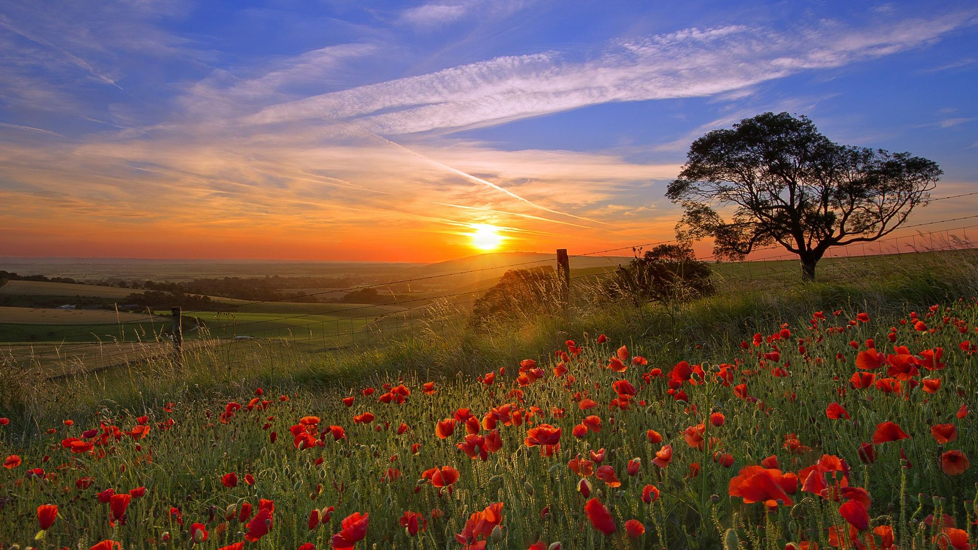Sunset And Flowers 1920x1080 Paysage Soleil Paysage Nature Paysage