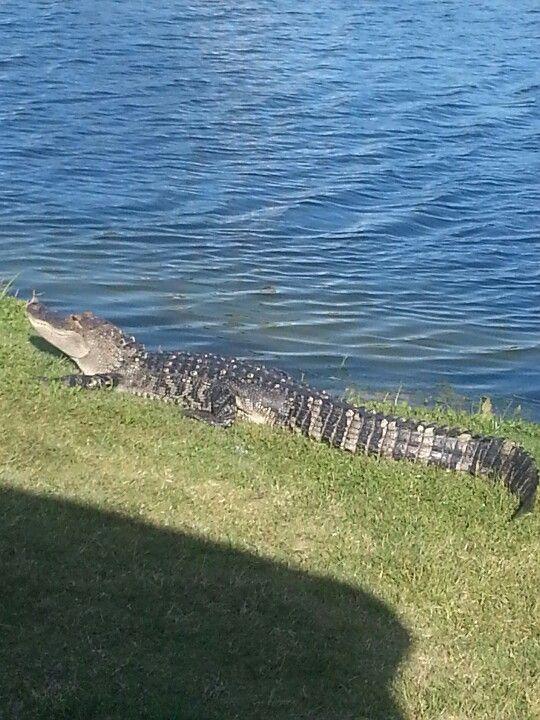 Gator Cocoa Beach Golf Course