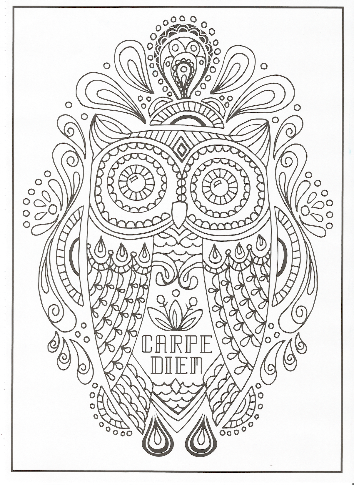 Timeless Creations Creative Quotes Coloring Page Carpe Diem Owl Coloring Books Creation Coloring Pages Mandala Coloring Books