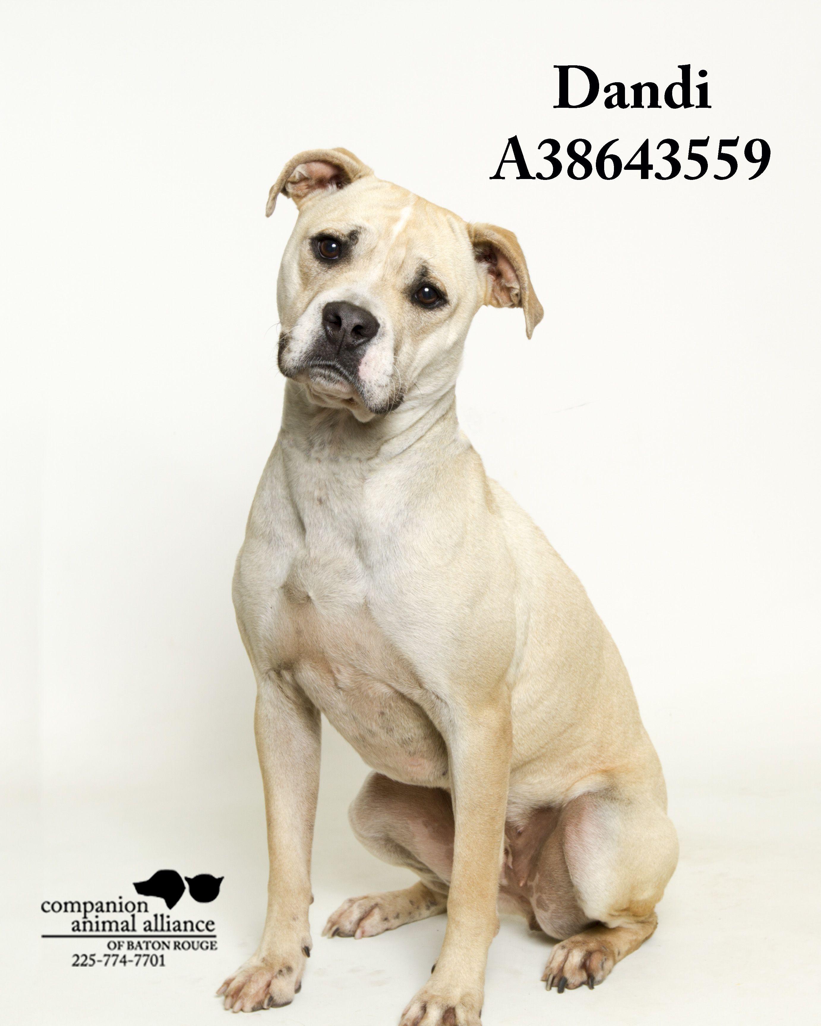 Adopt Dandi On Petfinder Animal Companions Help Homeless Pets Homeless Pets