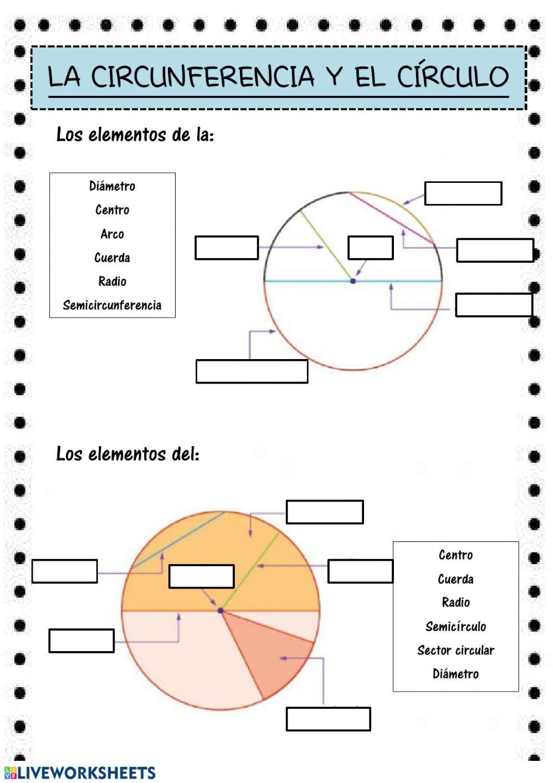 Geometria Ficha Interactiva Y Descargable Puedes Hacer Los Ejercicios Online O Descarg Circulo Y Circunferencia Actividades De Geometria Cursos De Matematicas