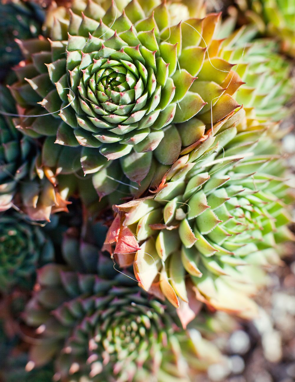 How drought-tolerant is your garden? Discover the best plants for saving water.