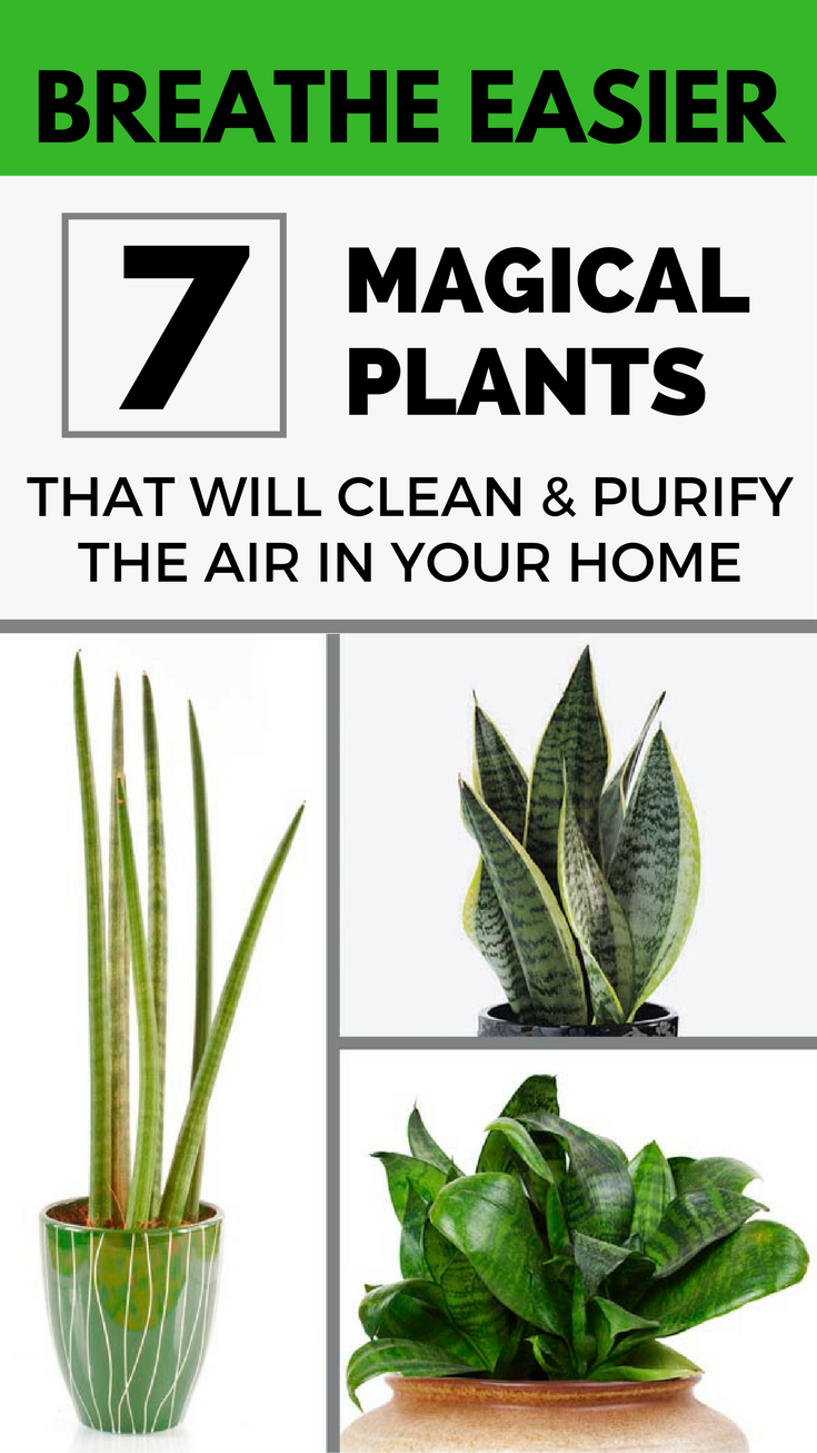 7 Magical Plants That Will Clean And Purify The Air In Your Home