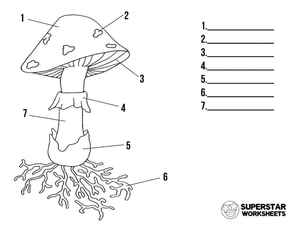Landform Worksheets For 2nd Grade Mushroom Life Cycle