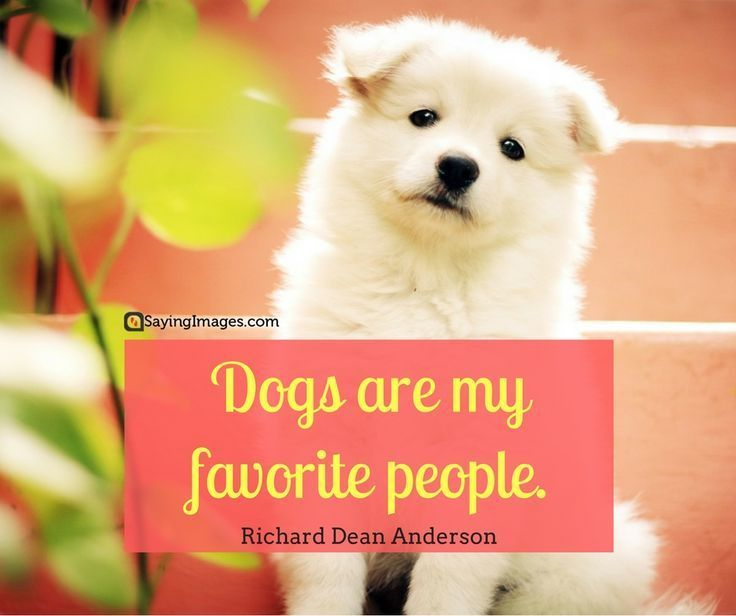 50 Dog Quotes For People Who Love Dogs Dog Quotes Short Dog