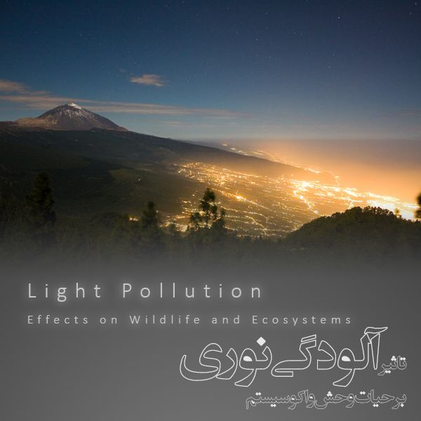 light pollution effects on wildlife and ecosystem | About