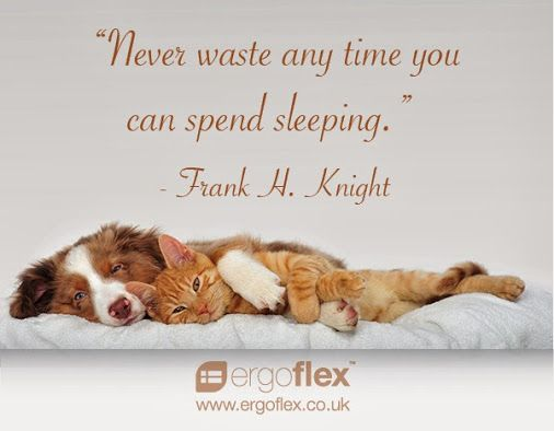 Sleepy Time Quotes Google Search Animals Pets Sleeping Dogs