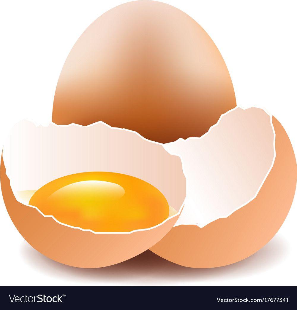 Eggs Vector Image On Vectorstock Flower Printable Food Clipart Egg Vector