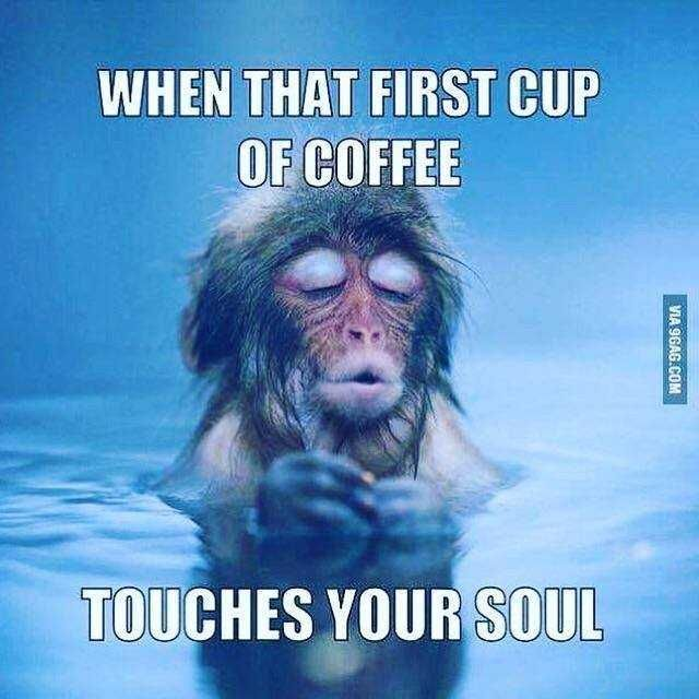 20 Funny Coffee Memes Thatll Perk Up Your Day Memes Pinterest