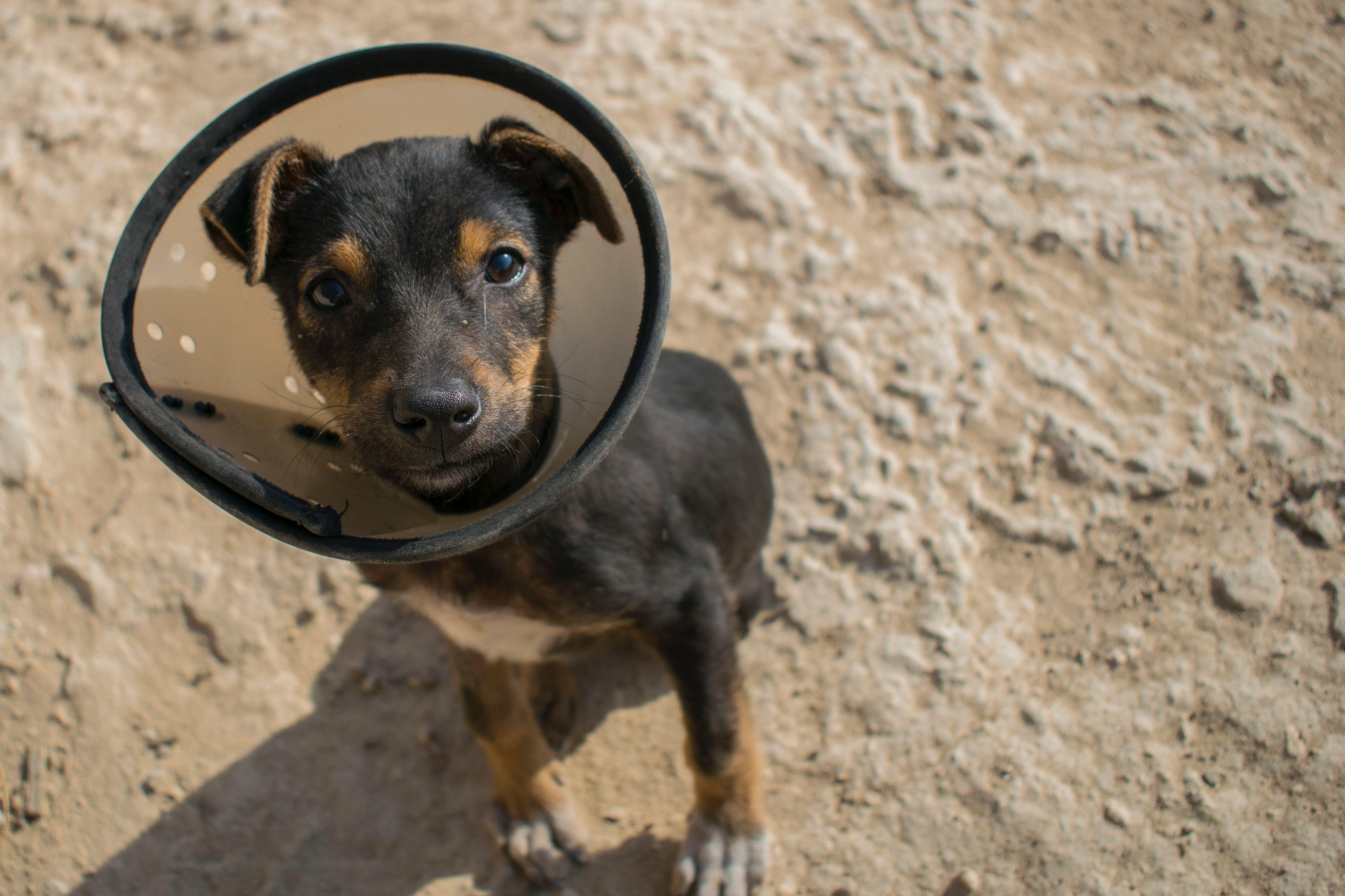 Insure My Pet RIGHTSURE 5209175295 Pet insurance