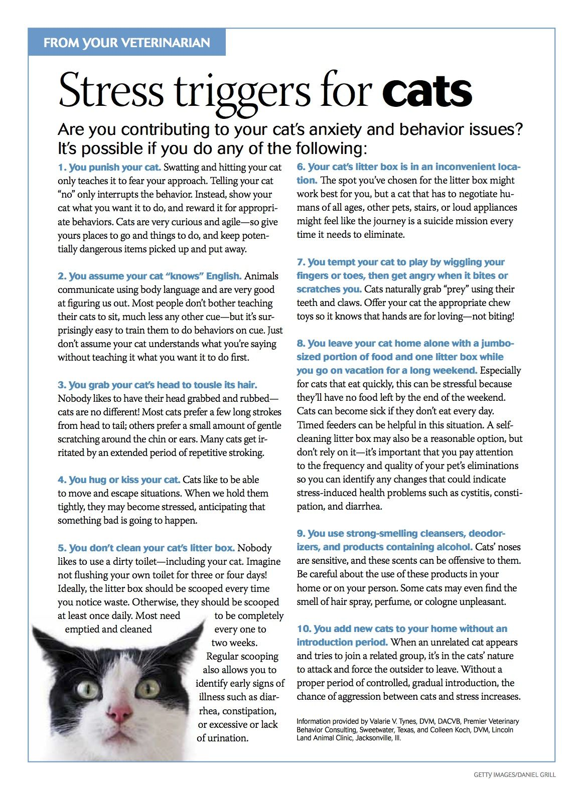Stress triggers for cats. pets pethealth petsafety
