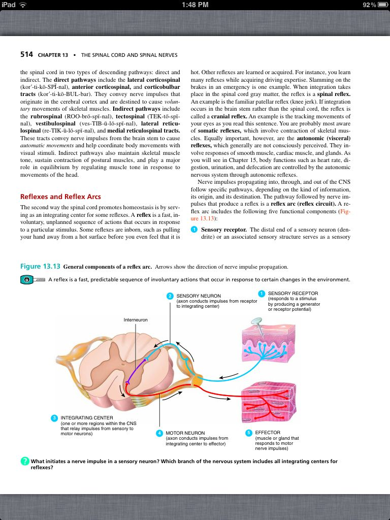 Principles of Anatomy and Physiology, Chapter 13, The Spinal Cord ...