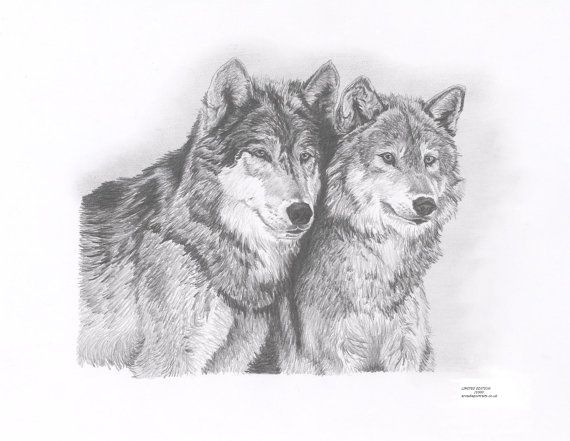 WOLVES Limited Edition art drawing print by ArcadiaPortraits