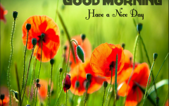 Good Morning Images Hd 1080p Good Morning Images Hd Good