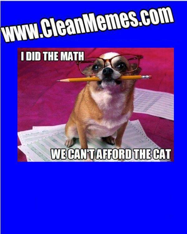 Math Meme Math Humor Math Memes Funny Animals