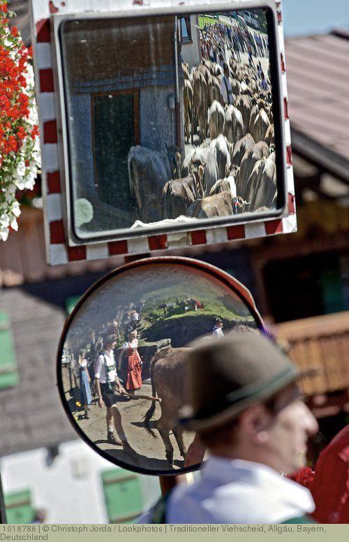 Traditioneller Viehscheid, Allgäu, Bayern, Deutschland