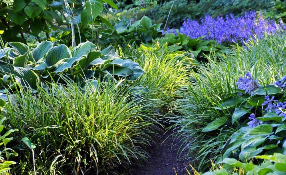 Die Stauden Und Ihre Lebensbereiche Garten Anlegen Stauden Garten
