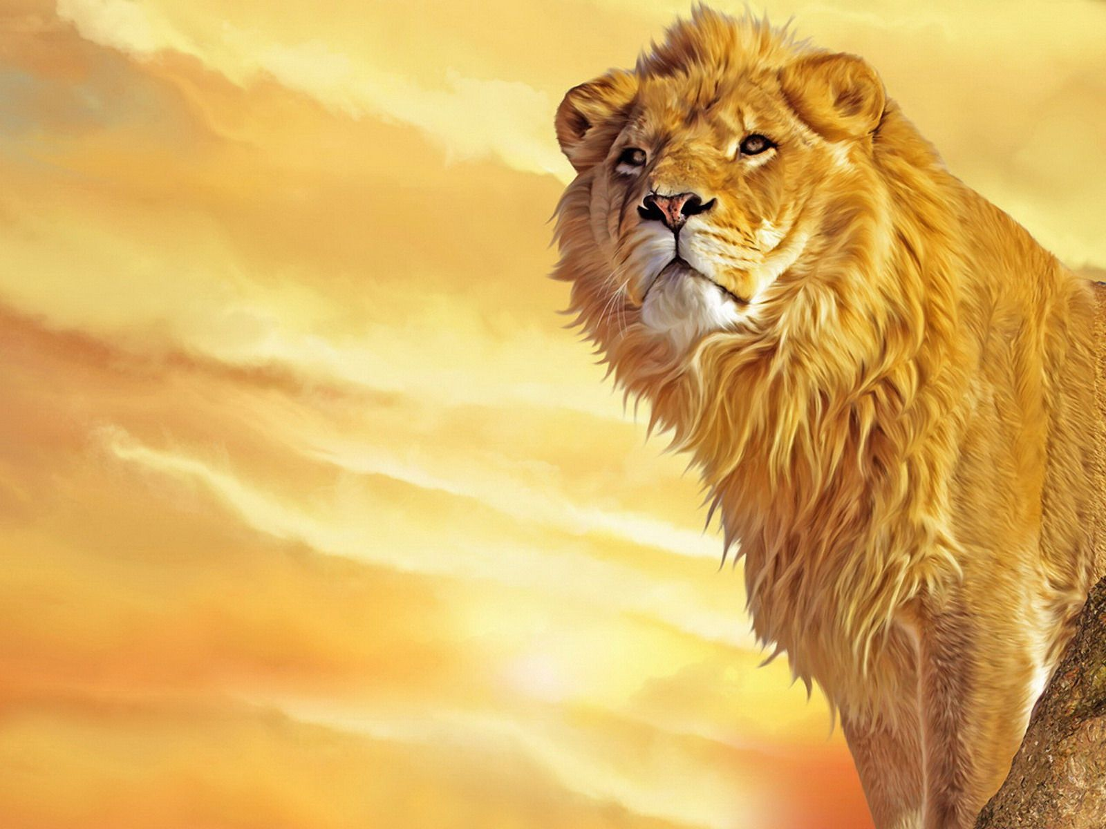 Painting Download Cartoon Lions Wallpaper Lion Painting